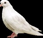 Превью Голуби (21) (149x130, 17Kb)
