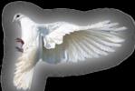 Превью Голуби (37) (149x100, 23Kb)