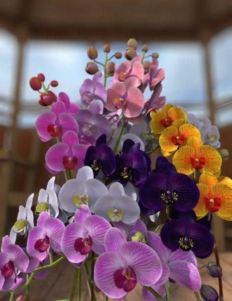 Разновидности цветов орхидей