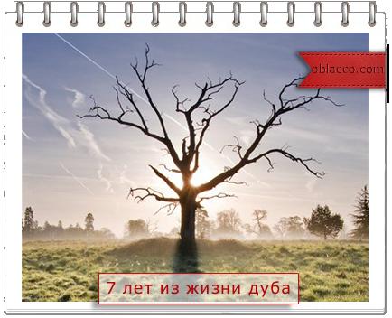 7 лет из жизни засохшего дуба/3518263_dyb (434x352, 220Kb)