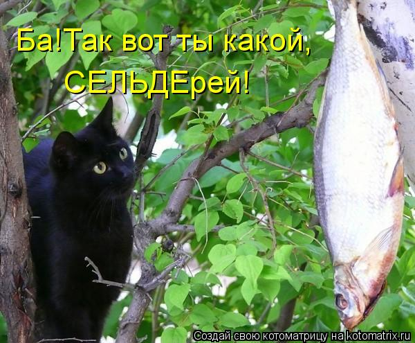 kotomatritsa_Dd (600x495, 65Kb)