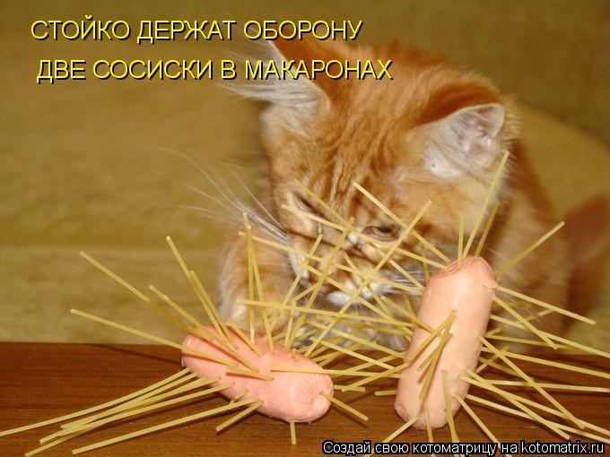 kotomatritsa_VK (680x510, 57Kb)