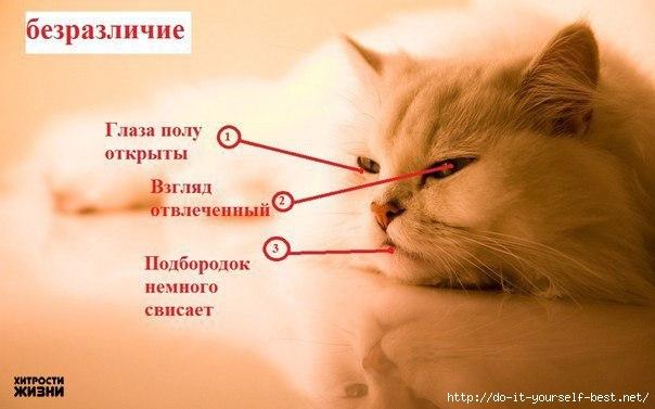 Что такое коты определение
