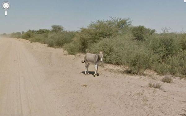 donkey4 (600x375, 24Kb)