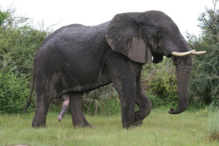 Самый длинный и толстый хуй в мире 16 фотография