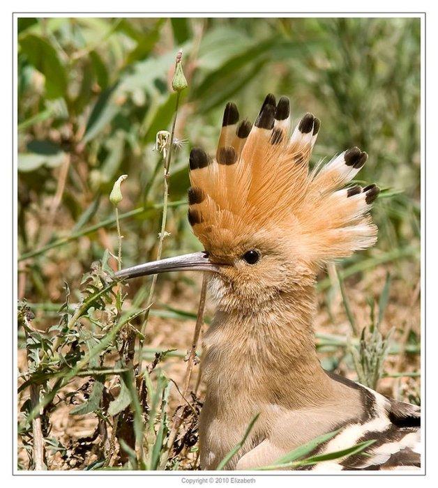 Это небольшая птичка с очень