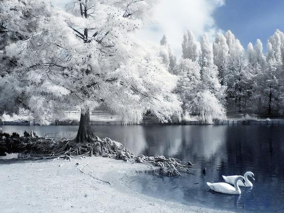 снег4 (554x416, 111Kb)