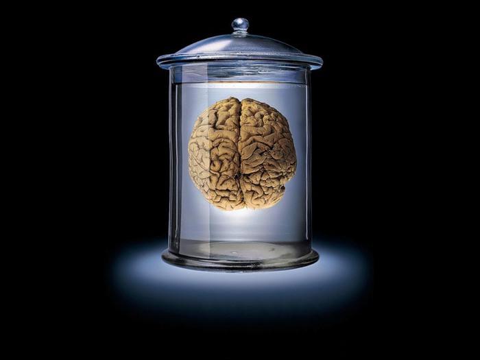 мозг фото/4171694_mozg_foto (700x525, 36Kb)