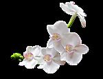 http://img1.liveinternet.ru/images/attach/c/7/96/592/96592429_large_0_8169e_16b394fd_Sjpg.png