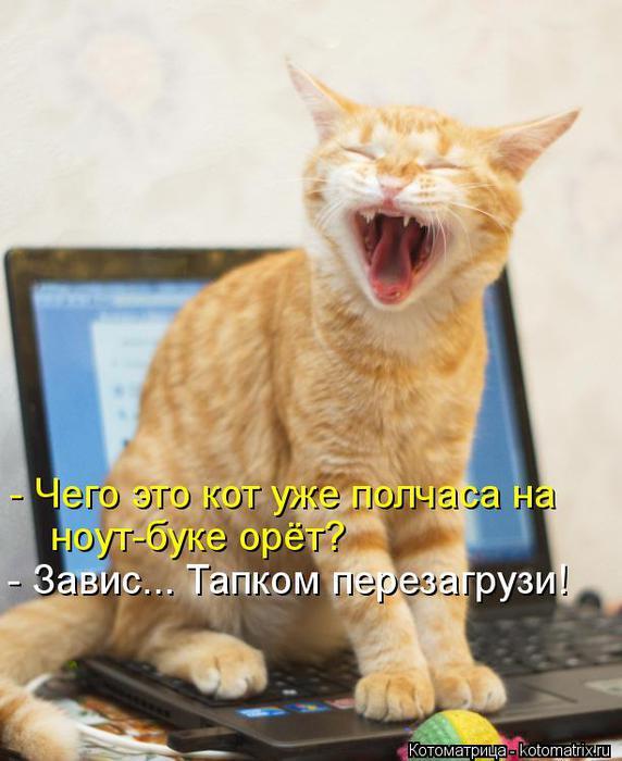 kotomatritsa_P1 (572x700, 50Kb)
