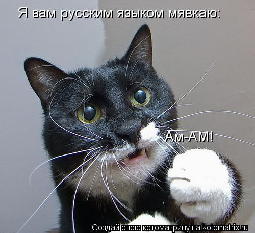 kotomatritsa_I (500x457, 41Kb)