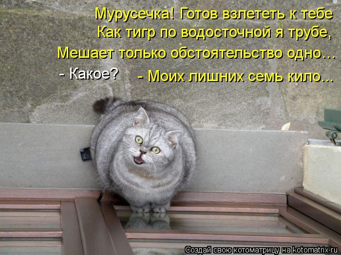 kotomatritsa_W7 (700x525, 82Kb)