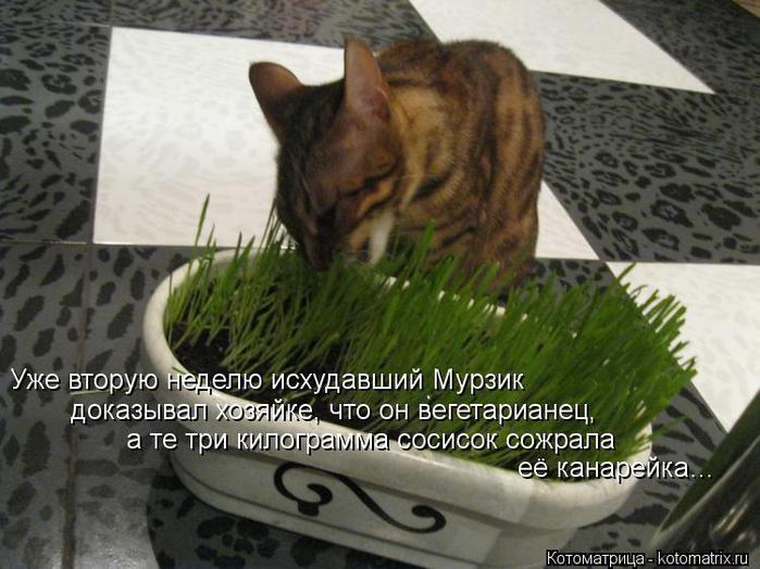 kotomatritsa_WYI (700x524, 61Kb)