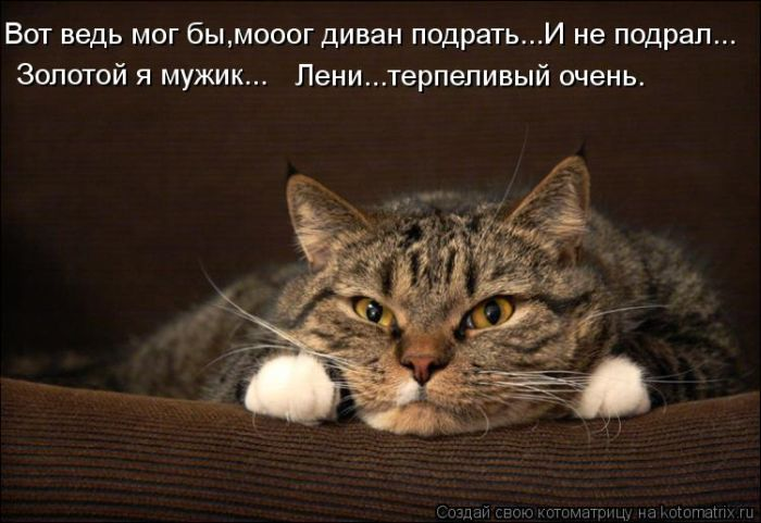 1355933432_lol54_ru_kotomatrix_011 (650x481, 53Kb)