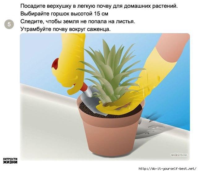 Комнатное цветоводство 96616691_large_5