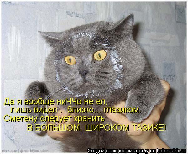 kotomatritsa_rL (600x492, 64Kb)