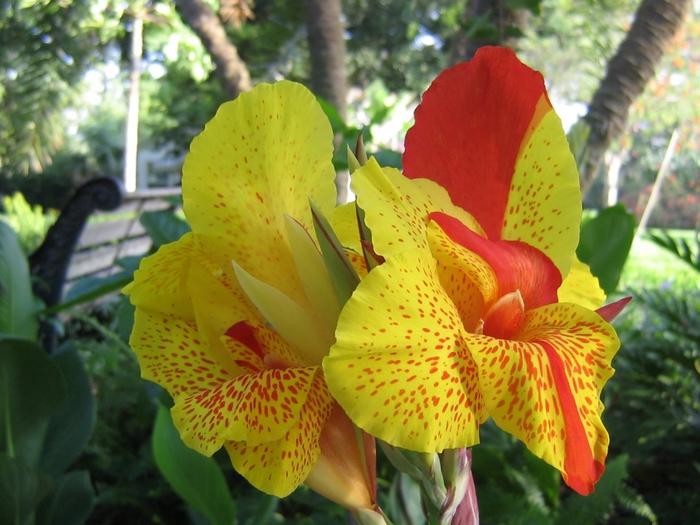 садовые цветы 1