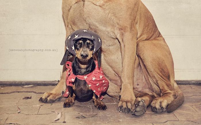 прикольные фото собак 4 (700x437, 222Kb)