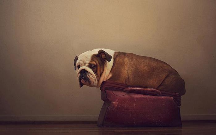 прикольные фото собак 9 (700x437, 137Kb)