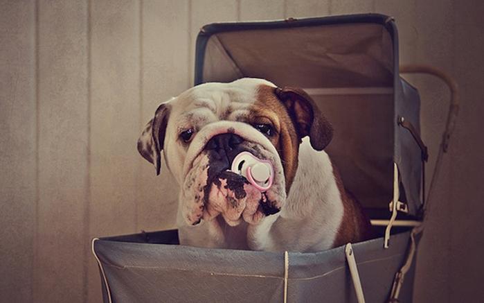 прикольные фото собак 11 (700x437, 177Kb)