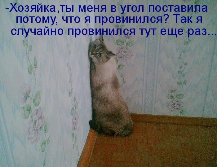 1311111978_1294850747_1293174750_kotomatrix_28 (700x539, 57Kb)