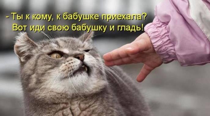 1311112069_1294850691_1293174763_kotomatrix_44 (687x380, 35Kb)