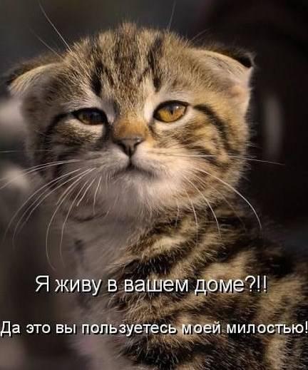 1311112087_1294850743_1293174763_kotomatrix_03 (432x519, 37Kb)
