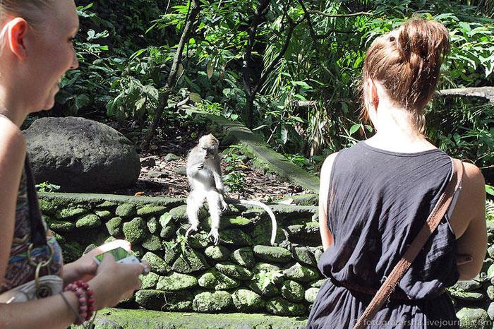 1. Обезьяний лес на Бали находится в Убуде, входной билет стоит 20 тыс. рупий (около 65 рублей), за отдельную цену приобретаются бананы для мартышкусов (700x466, 131Kb)