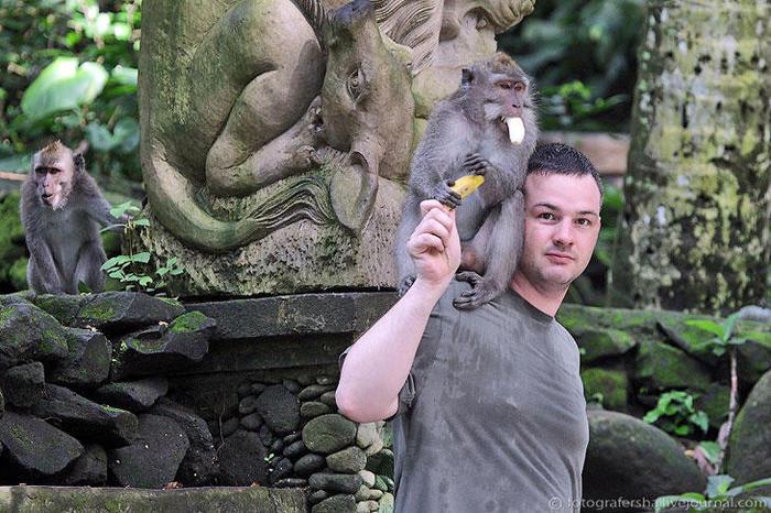2. Посетителей учат правильно давать мартышке банан — надо встать и поднять правую руку с фруктом вверх. Обезьян сам разберется, что делать дальше. Не делайте резких движений, не показывайте зубы — признак агрессии (700x466, 87Kb)