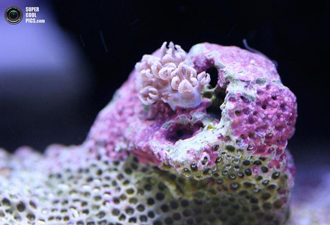 коралы фото 1 (670x457, 62Kb)