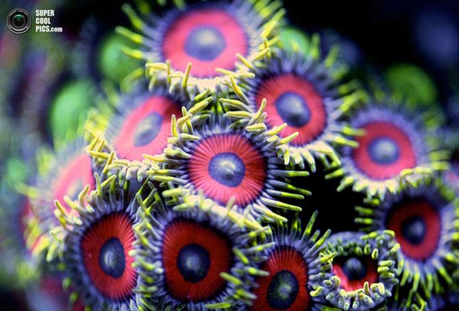 коралы фото 3 (670x453, 85Kb)