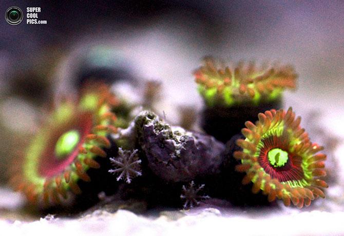 коралы фото 5 (670x460, 68Kb)