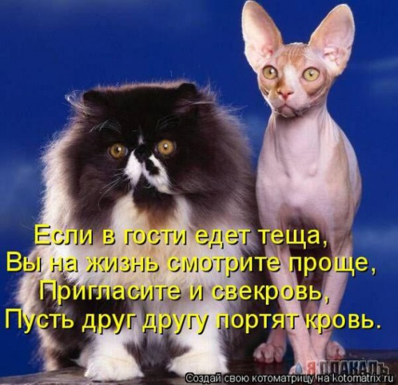 1359321433_96696243_large_4 (570x551, 79Kb)