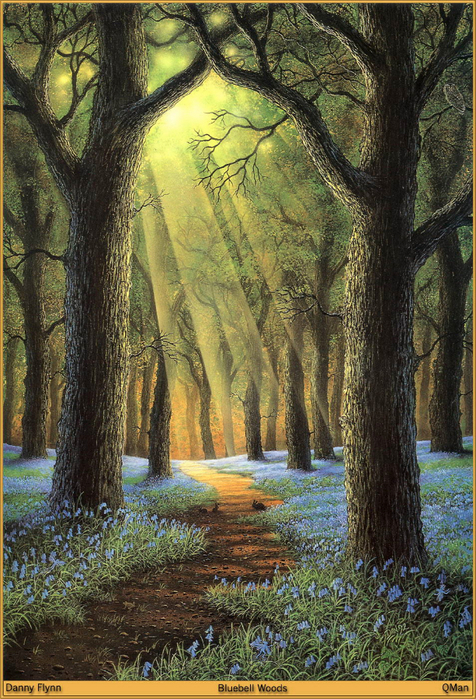 QMan_DF_OVTP_1225_Bluebell_Woods (476x700, 528Kb)