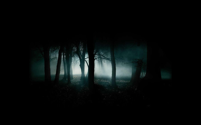 dark-forest-10914 (700x437, 67Kb)