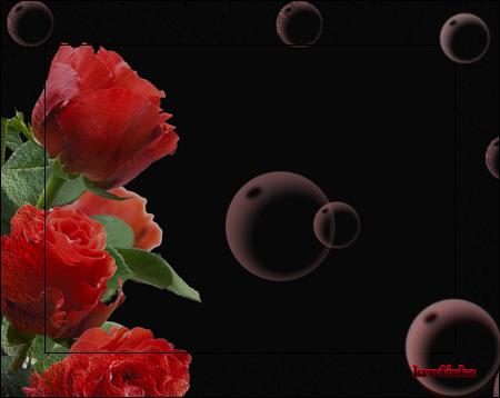 Красные-розы-на-черном (450x358, 154Kb)