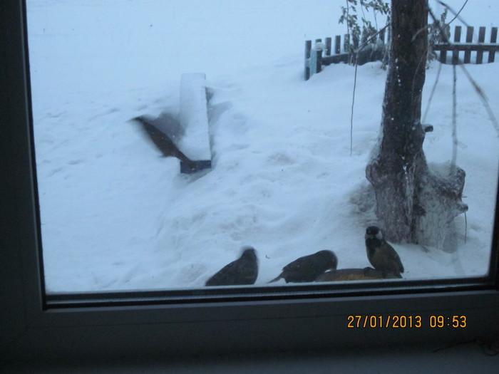 Ягоды на снегу 033 (700x525, 64Kb)