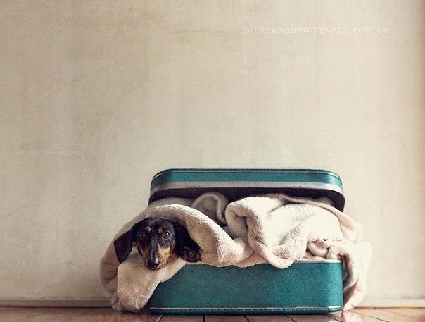 прикольные фото собак 2 (604x457, 39Kb)