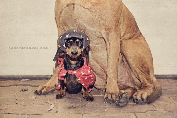 прикольные фото собак 4 (604x401, 59Kb)