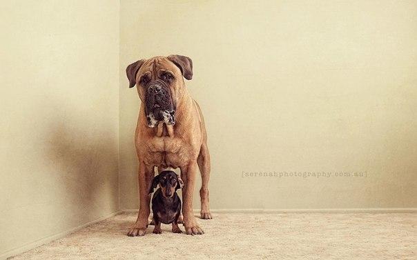 прикольные фото собак 6 (604x377, 31Kb)