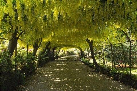 Сад Боднант, Северный Уэльс (480x320, 59Kb)