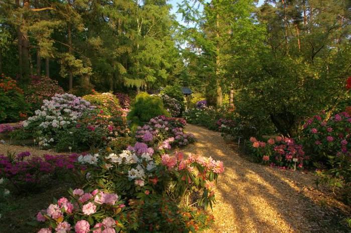 Рододендроновый парк-Westerstede Rhododendronpark. 11243