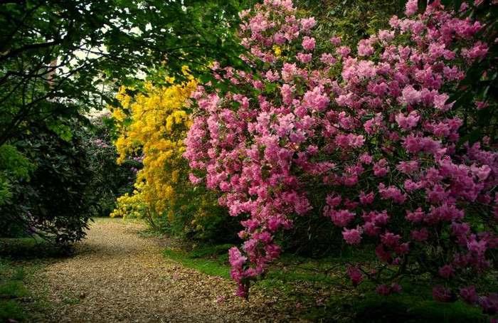 Рододендроновый парк-Westerstede Rhododendronpark. 66056