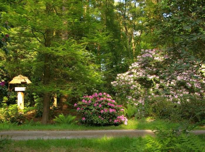 Рододендроновый парк-Westerstede Rhododendronpark. 86820
