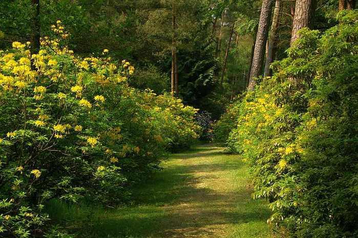 Рододендроновый парк-Westerstede Rhododendronpark. 12779