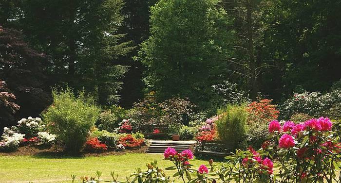Рододендроновый парк-Westerstede Rhododendronpark. 42827