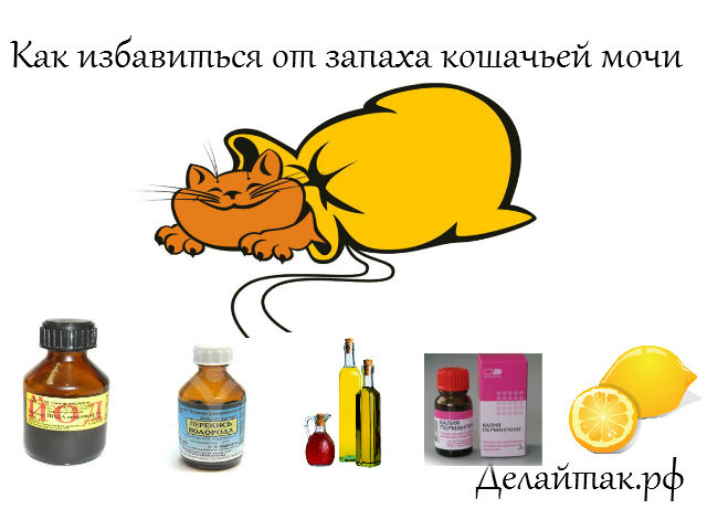 4524271_kak_izbavitsya_ot_zapaha_koshachei_mochi (640x480, 50Kb)