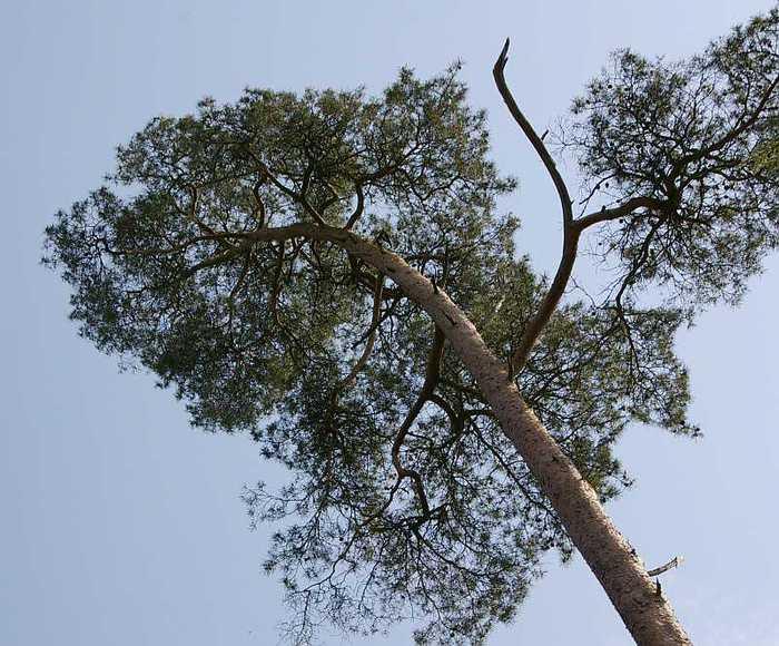 Рододендроновый парк-Westerstede Rhododendronpark. 65033