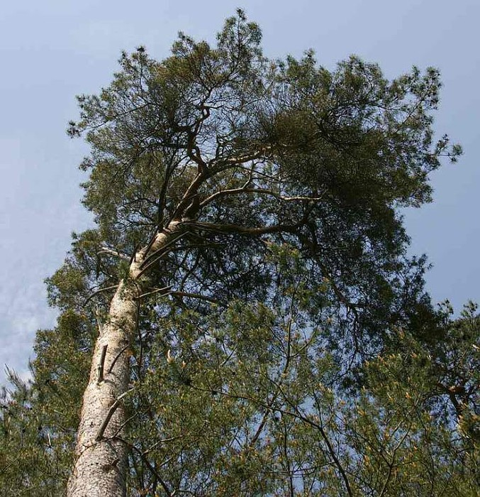 Рододендроновый парк-Westerstede Rhododendronpark. 43717