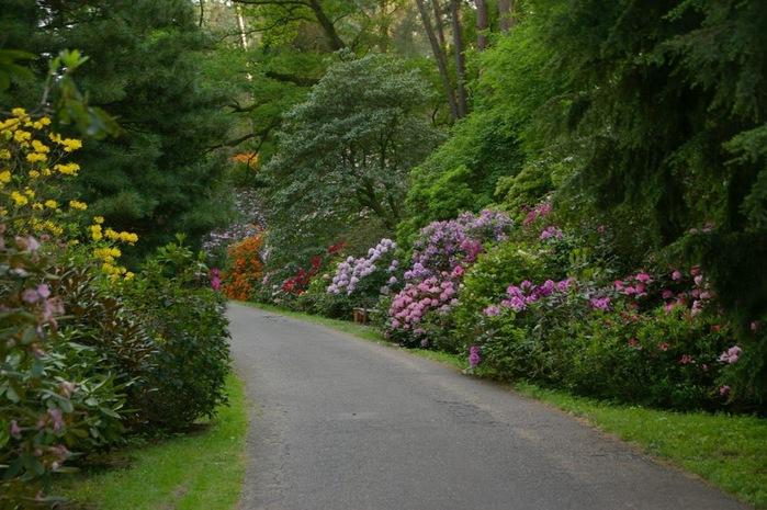 Рододендроновый парк-Westerstede Rhododendronpark. 68248